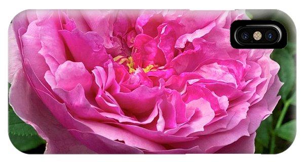 Rose (rosa 'cessa') Flower Phone Case by Ian Gowland