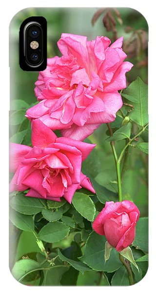 Hybrid iPhone Case - Rose (rosa 'freiher Von Marshall') by Brian Gadsby/science Photo Library
