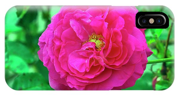 Rose (rosa 'karlsruhe') Phone Case by Neil Joy/science Photo Library