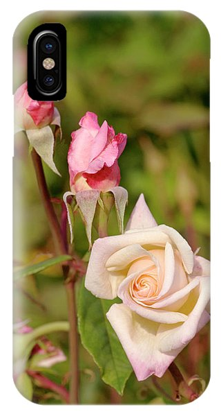 Hybrid iPhone Case - Rose (rosa 'mlle Franziska Kruger') by Brian Gadsby/science Photo Library
