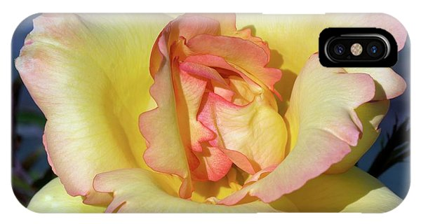 Rose (rosa 'parure D'or') Phone Case by Brian Gadsby/science Photo Library