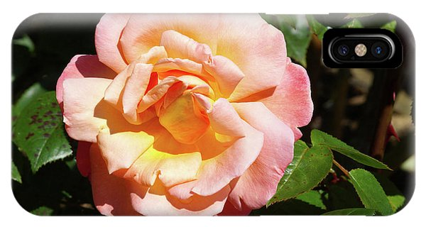 Hybrid iPhone Case - Rose (rosa Troika = 'poumidor') by Neil Joy/science Photo Library