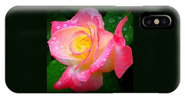 Rose With Water Droplets  IPhone Case