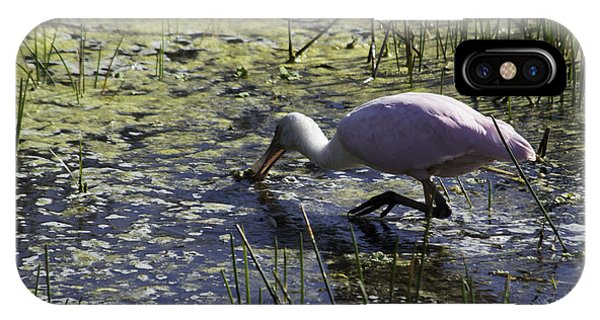 Roseate Spoonbill Ix IPhone Case