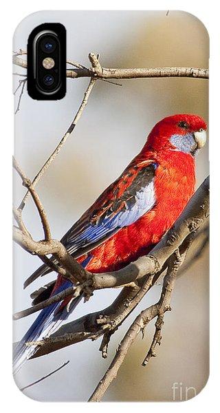 Crimson Rosella 1 - Australia IPhone Case