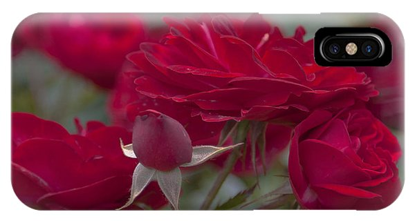 Roses And Roses IPhone Case