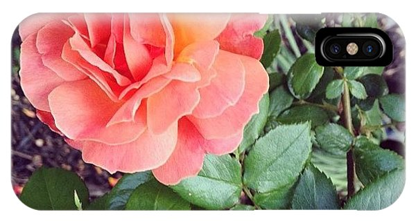 Petals iPhone Case - Roses Are Salmon...wait, What!? by Amber Flowers