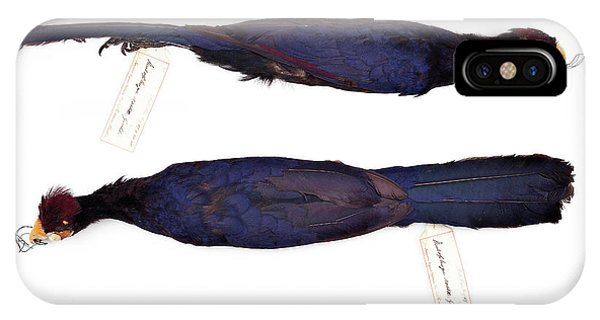 Ross's Turaco Phone Case by Natural History Museum, London