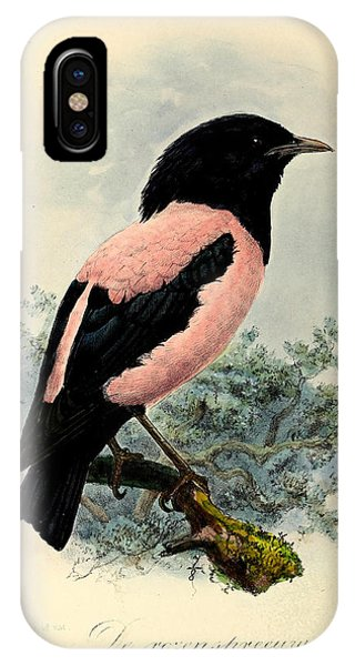 Starlings iPhone Case - Rosy Starling by Dreyer Wildlife Print Collections