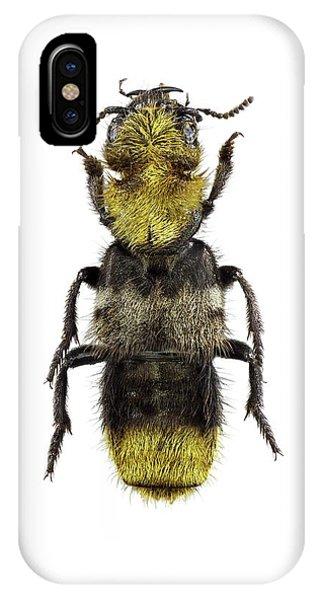 Emu iPhone Case - Rove Beetle by F. Martinez Clavel
