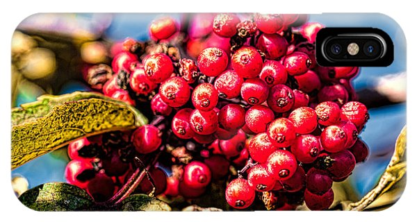 Rowan Berries IPhone Case
