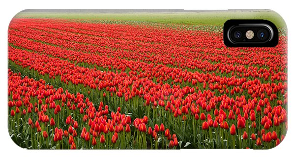 Wheeler Farm iPhone Case - Rows Of Red Tulips by James Wheeler