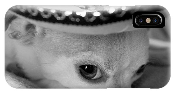 Chihuahua iPhone Case - Roxie by Glennis Siverson