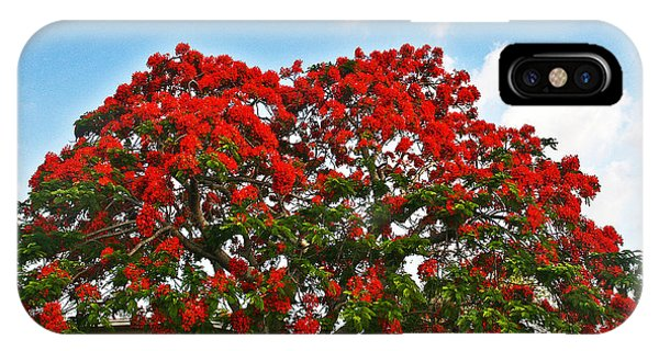 Royal Panciana Tree IPhone Case