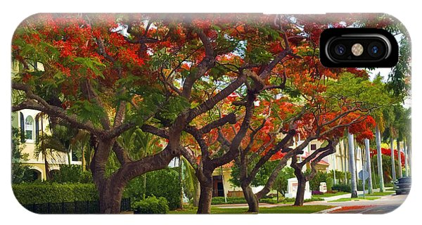Royal Poinciana Trees Blooming In South Florida IPhone Case