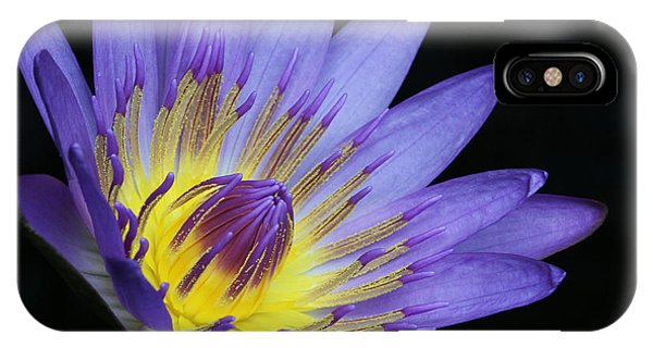 Royal Purple Water Lily #14 IPhone Case