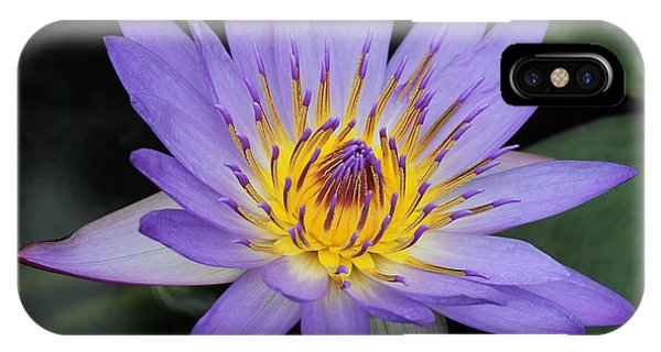 Royal Purple Water Lily #4 IPhone Case