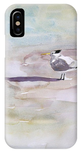 Royal Tern  IPhone Case