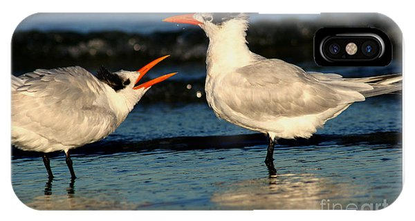 Royal Tern Courtship Dance IPhone Case