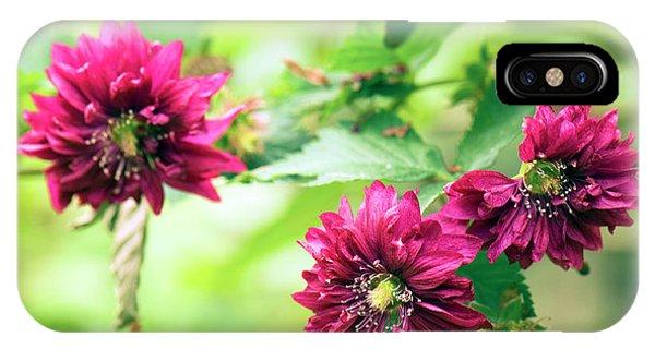 Cultivar iPhone Case - Rubus Spectabilis 'olympic Double' by Adrian Thomas