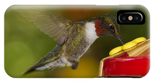 Ruby-throat Hummer Sipping IPhone Case