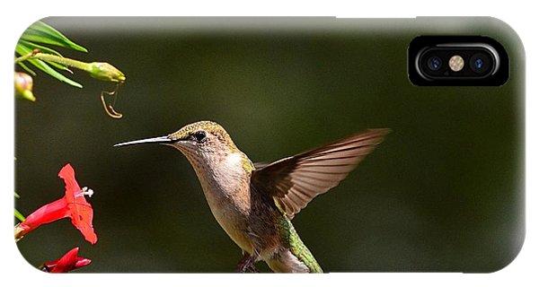 Ruby Throat Hummingbird IPhone Case