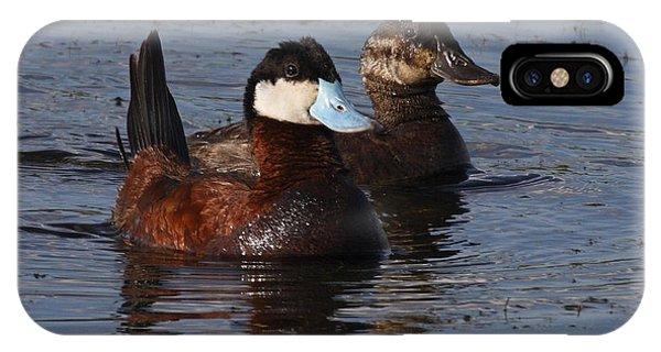 Horicon Marsh iPhone Case - Ruddy Duck Pair by Mark Wallner