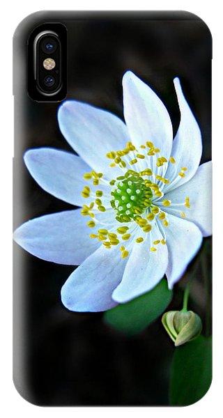 Rue Anemone IPhone Case