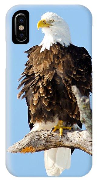Ruffled Eagle IPhone Case