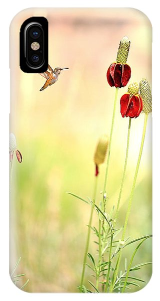 Rufous Hummingbird Mexican Hat Corn Flower IPhone Case