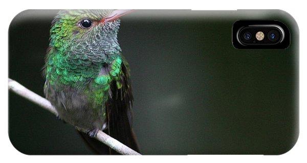 Rufous-tailed Hummingbird Phone Case by Joe Sweeney