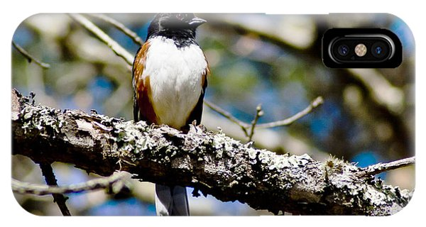 Rufus Sided Towhee Phone Case by Dennis Coates