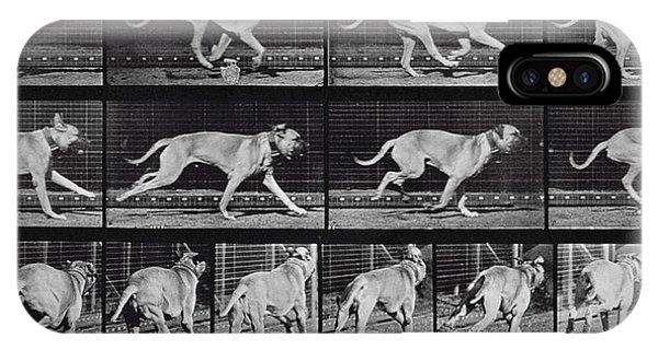 Mastiff iPhone Case - Running Dog by Eadweard Muybridge