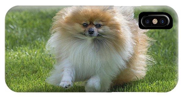 Pomeranian iPhone Case - Running Pomeranian by John Shaw