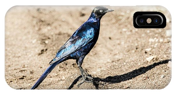 Ruppell's Glossy-starling IPhone Case