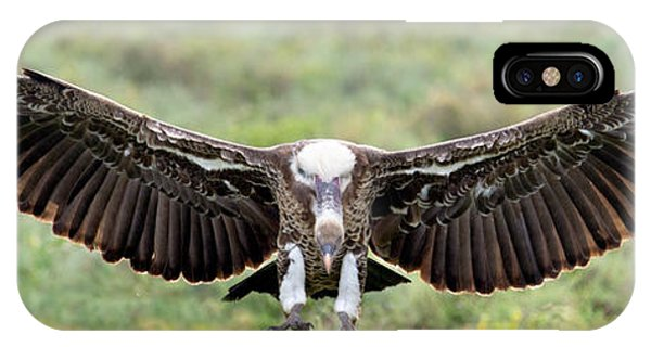 Griffon iPhone Case - Ruppells Griffon Vulture Gyps by Panoramic Images