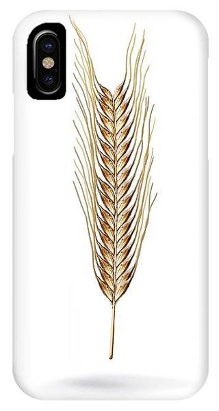Monocotyledon iPhone Case - Rye (secale Cereale) In Flower by Mikkel Juul Jensen