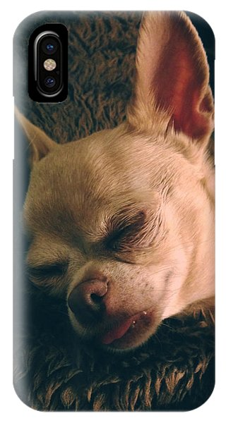 Chihuahua iPhone Case - Sacked Out by Laurie Search