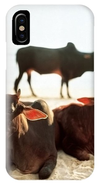 IPhone Case featuring the photograph Sacred Cows On The Beach by Carol Whaley Addassi