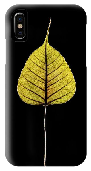 Sacred Fig (ficus Religiosa) Leaf Phone Case by Gilles Mermet