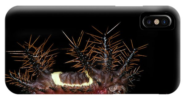 Caterpillar iPhone Case - Saddleback Moth Caterpillar (acharia by Pete Oxford