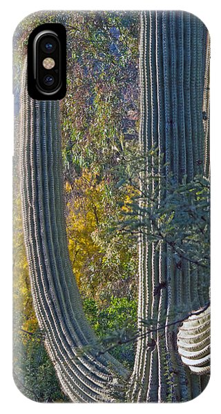 IPhone Case featuring the photograph Saguaro Fall Color by Tam Ryan