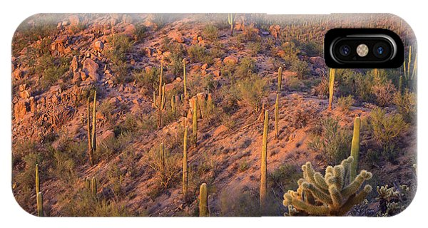 Cylindropuntia Bigelovii iPhone Case - Saguaro National Park by Tim Fitzharris