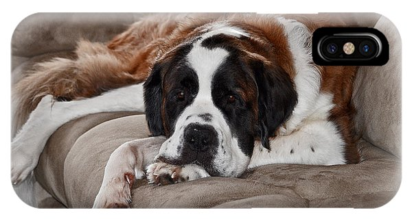 Saint Bernard IPhone Case