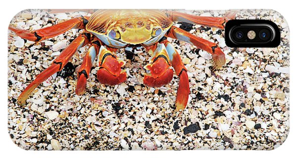 Sally Lightfoot Crab Phone Case by Sue Ford/science Photo Library