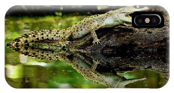 Crocodile iPhone Case - Salt Water Crocodile, Crocodylus by David Northcott
