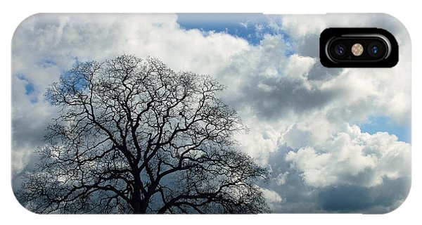 Same Tree Many Skies 13 IPhone Case