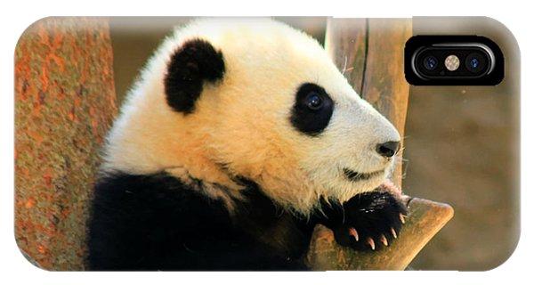 San Diego Zoo Panda Bear Xiao Liwu IPhone Case