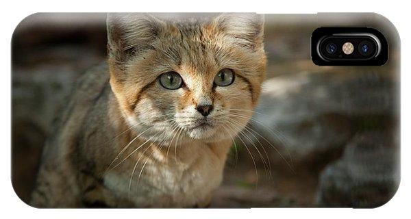 Psi iPhone Case - Sand Cat (felis Margarita) by Photostock-israel