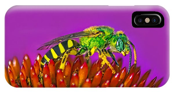 Sand Wasp IPhone Case